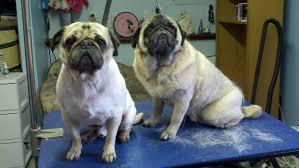 laurel s pet grooming