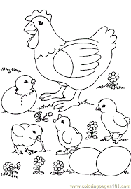 Small Picture Chicken Coloring Page 0001 14 Coloring Page Free Chicks Hens