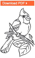 Small Picture Wild Bird Coloring Pages for Kids from Drs Foster Smith
