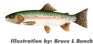 Trout Species Of North Carolina