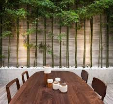 Small Picture 81 best images on Pinterest Bamboo garden Landscaping