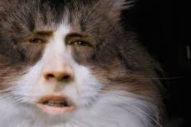 The rare Nicolas Cage cat. hahaha | Morphed Animals | Pinterest ... via Relatably.com