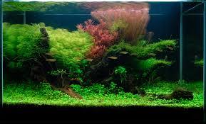 cube garden 60p 60p