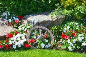 Image result for yard flowers