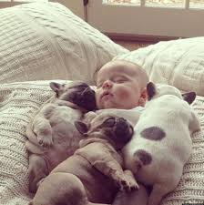 cute baby bulldog.  Cute Bulldog Puppies And A Baby In Cute