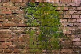 old brick wall with green moss texture high quality free photo in cattegory textures