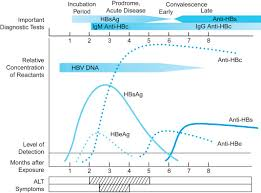 Hep B Chart Hbsag An Overview Sciencedirect Topics