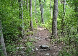 Beebe Woods Walk | Buzzards Bay Coalition