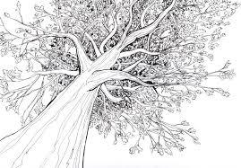 realistic apple tree drawing. Wonderful Apple Try To Draw Tree Like This To Realistic Apple Tree Drawing