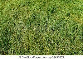 wild grass texture. Wild Grass Texture B