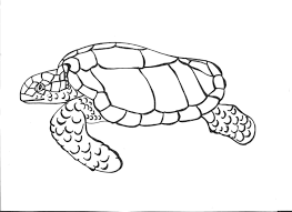 Small Picture Coloring Pages Sea Turtles Drawing Turtle Steps Pencil Drawings