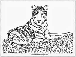 Small Picture Realistic Coloring Pages Bestofcoloringcom