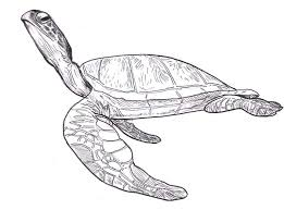 Small Picture Sea Turtle Leatherback Free Coloring Page Download Print