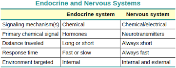 Comparative Functions Of Nervous And Endocrine Systems Chart Openstax Anatomy And Physiology Ch17 The Endocrine