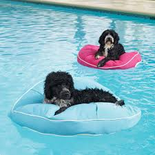 pool floats for dogs.  Floats Kai Pet Pool Floats Throughout For Dogs