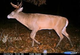 Deer Antler Age Chart The 7 Sins Of Aging Bucks On The Hoof