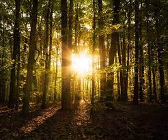 Sonnenaufgang im Wald Foto & Bild   landschaft, wald, landschaft / natur  Bilder auf fotocommunity