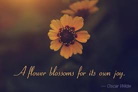 Flower Quotes Interesting Awesome Quotes And Sayings About Flowers For A Slice Of Happy
