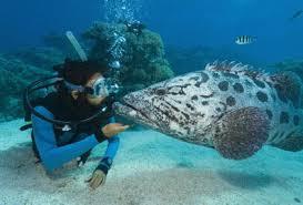 scuba diving in lanzarote