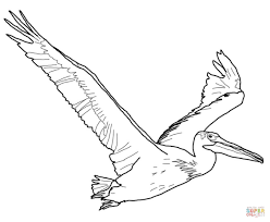 Small Picture American White Pelican coloring page Free Printable Coloring Pages