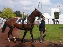 """Résultat de recherche d'images pour """"image des chevaux pmu"""""""