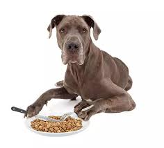 Great Dane Food Chart A Simple Guide On How Much When And What To Feed A Great