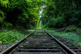 Image result for overgrown track