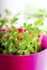 Kitchen Herbs Garden How To Plant A Small Container Herb Garden For Your Kitchen Herbs