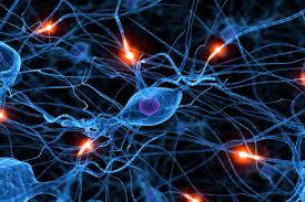 Image result for کاهش بعد با استفاده ازشبکه های عصبی