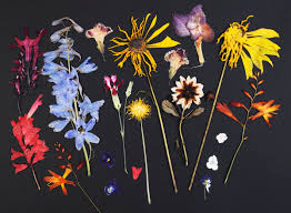 How to dry flowers: By pressing