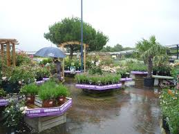 view of the plants area at cadbury garden centre