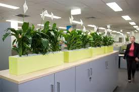 office indoor plants. Open Plan Offices - Indoor Plants Displays From Ambius Office
