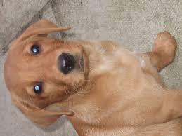 york dog. contact the seller york dog r