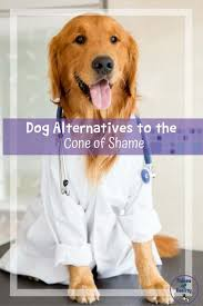 alternatives to the dog cone of shame
