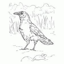 Vogels Kleurplaten Leuk Voor Kids
