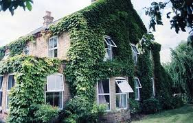 Ivy-covered houses to add a breath of fresh air to your morning. They look  right out of storybooks.