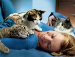 Людина і кішка. Які хвороби лікують вусаті «лікарі»