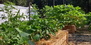 how to start your own garden. simply organic-how to start your own organic garden how to start your own garden r