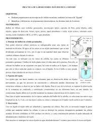 Propiedades Del Colorante Acetoceinal L