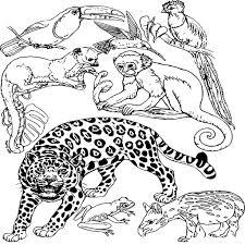 Coloriage Animaux De La Jungle Imprimer Sur Coloriages L