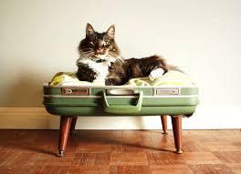 """Résultat de recherche d'images pour """"vacances avec animaux"""""""