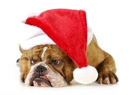 Dogs Christmas ( New year ) Winter hat Bulldog Animals wallpaper ...