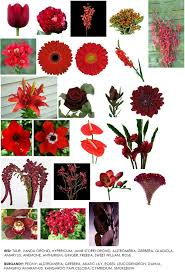 165 best types of flowers images on flower arrangements flower names and flowers