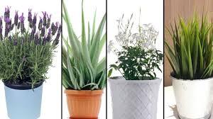 5 Pflanzen Die Du In Deinem Schlafzimmer Haben Solltest Um Besser