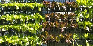 growing an edible living wall