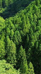 Green forest, trees, top view 1080x1920 ...