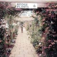 garden centres near boroughbridge