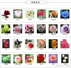 2018 30 kinds of diffe color rose seeds each color 20 seeds 600 roses colorful flower seeds whole from lijiao 7 63 dhgate