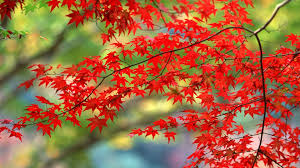 Autumn In Japan Wallpaper #7009968