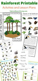 Printable Kids The Best Rainforest Printable Activities For Kids Natural Beach Living